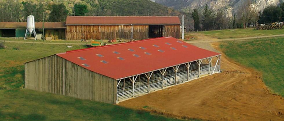 Stabulation vaches allaitantes sur aire paillée