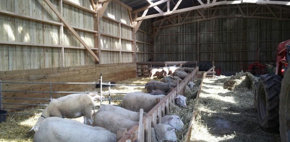 batiment agricole d'une bergerie en bois bien ventile