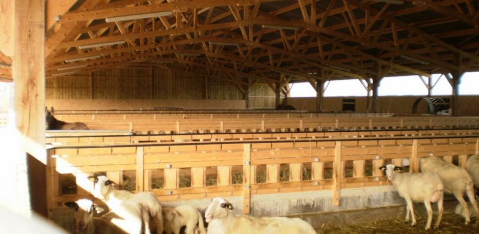 hangar agricole en bois pour moutons avec une charpente en bois