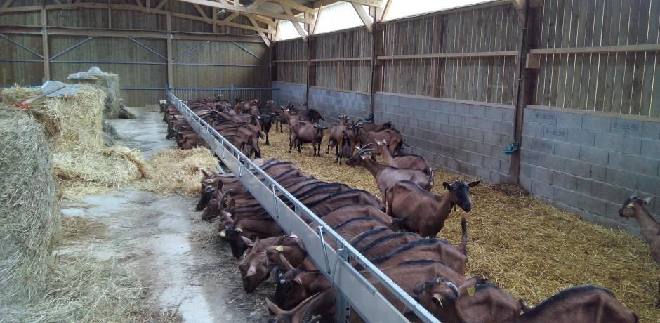 chèvrerie en charpente bois traditionnelle