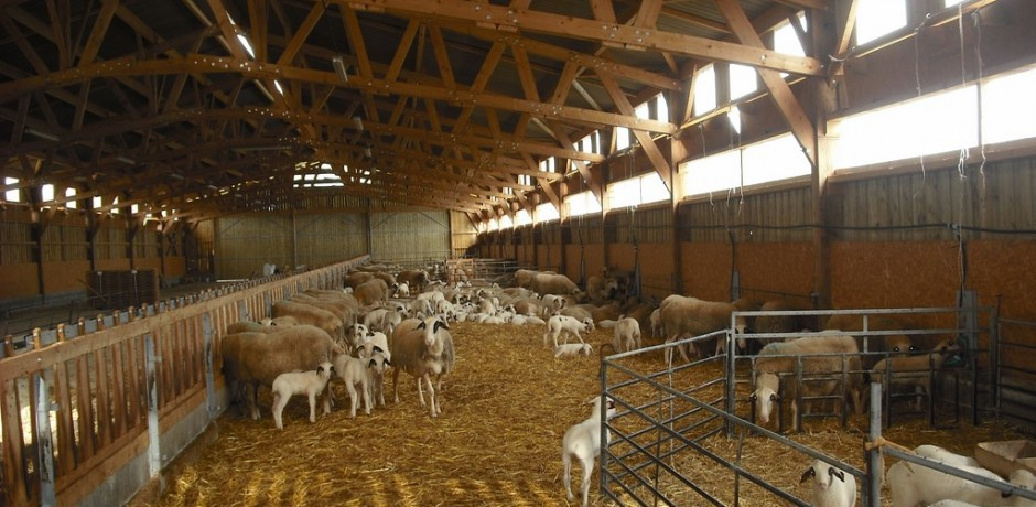 charpente agricole triangulee pour moutons avec une bonne ventilation