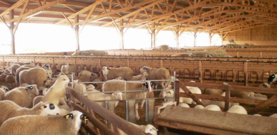 amenagement interieur d'un batiment agricole en bois pour bergerie