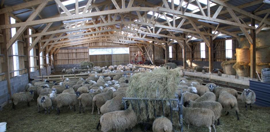 batiment agricole bergerie en bois