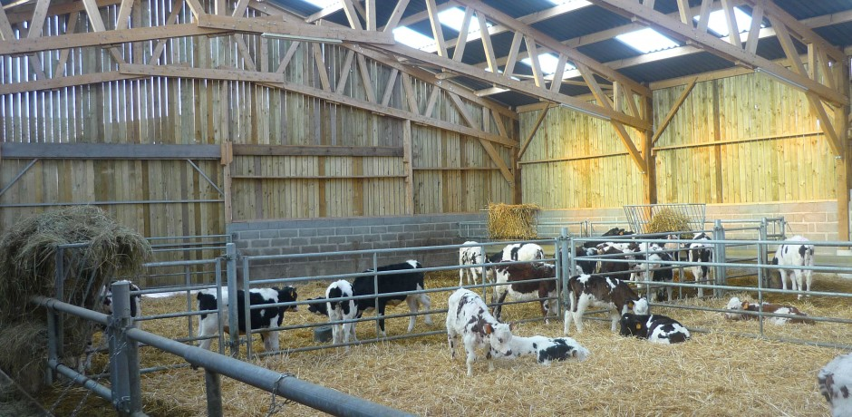 stabulation-bois-vaches-laitieres